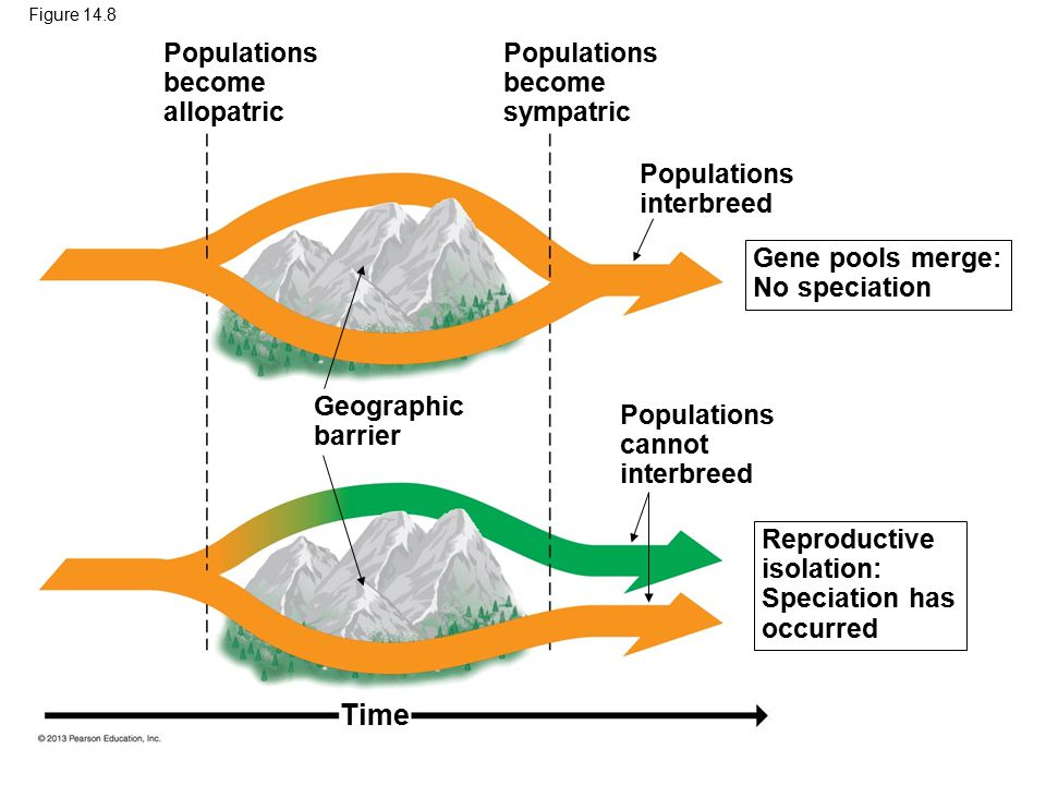 Time Populations become allopatric Populations become sympatric