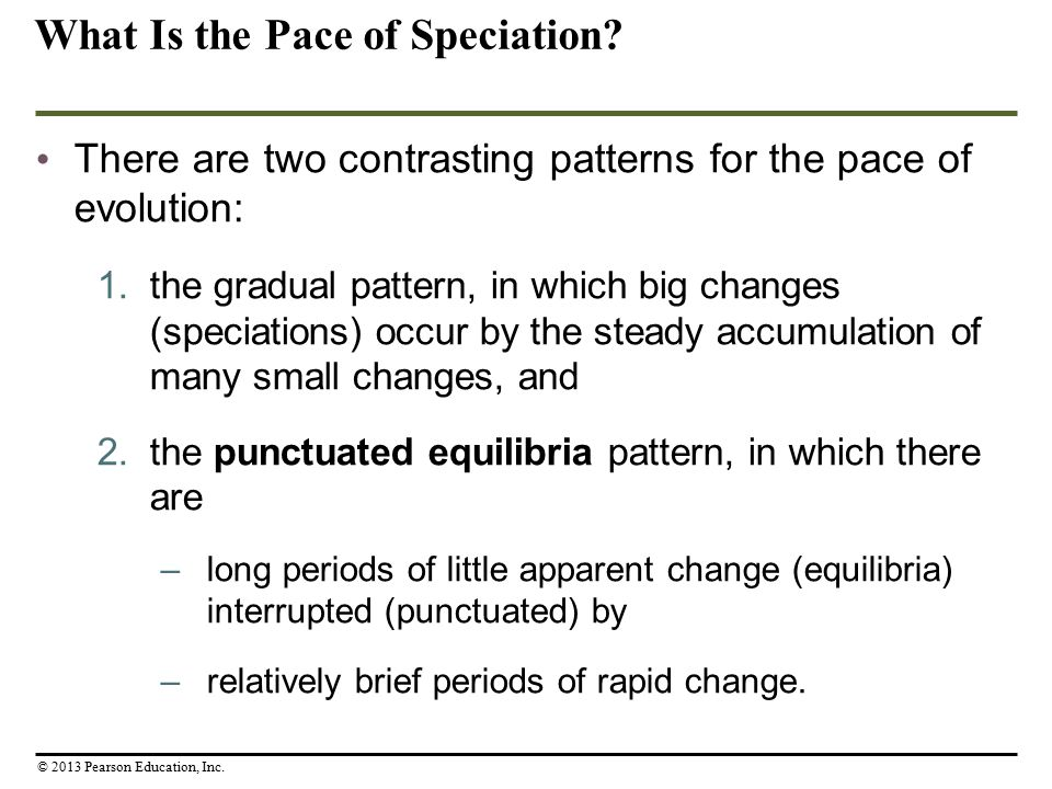 What Is the Pace of Speciation