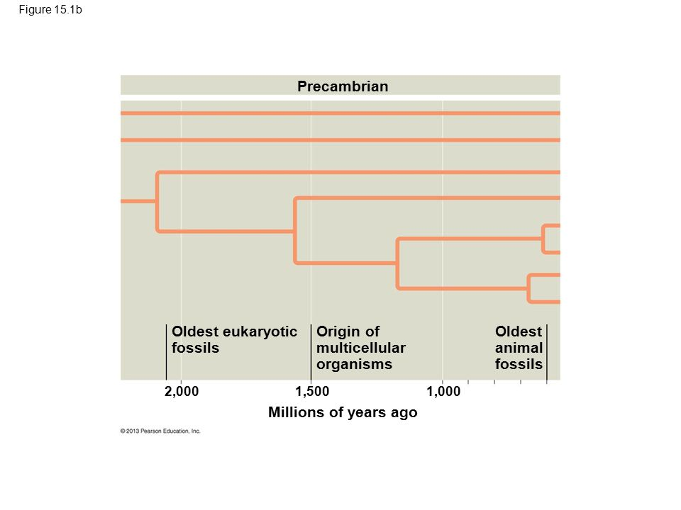 27 Precambrian Oldest eukaryotic fossils