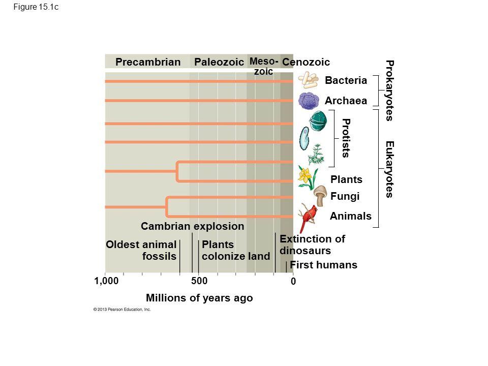 28 Precambrian Paleozoic Cenozoic Bacteria Prokaryotes Archaea