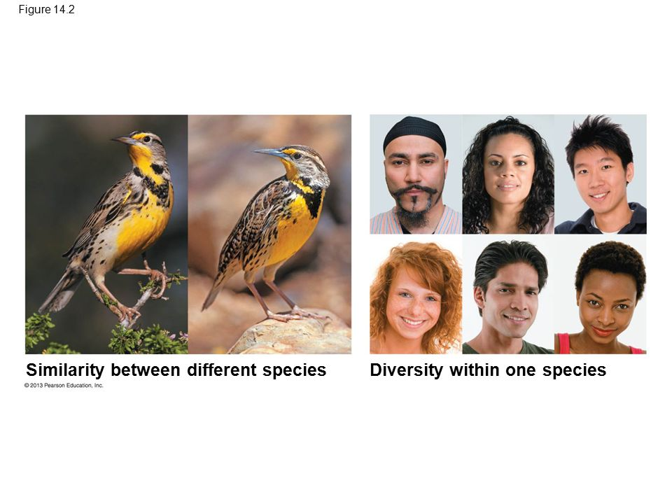 Similarity between different species Diversity within one species