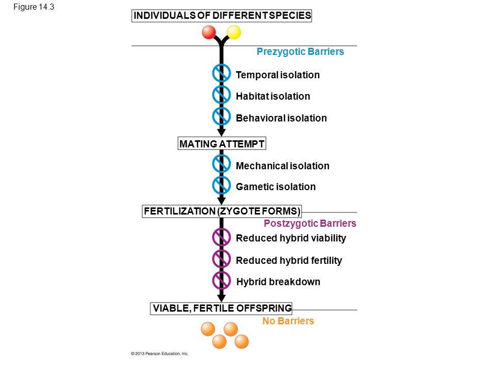 INDIVIDUALS OF DIFFERENT SPECIES
