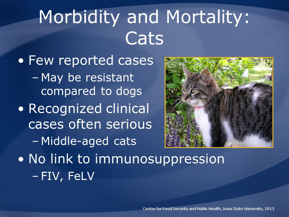 Morbidity and Mortality: Cats