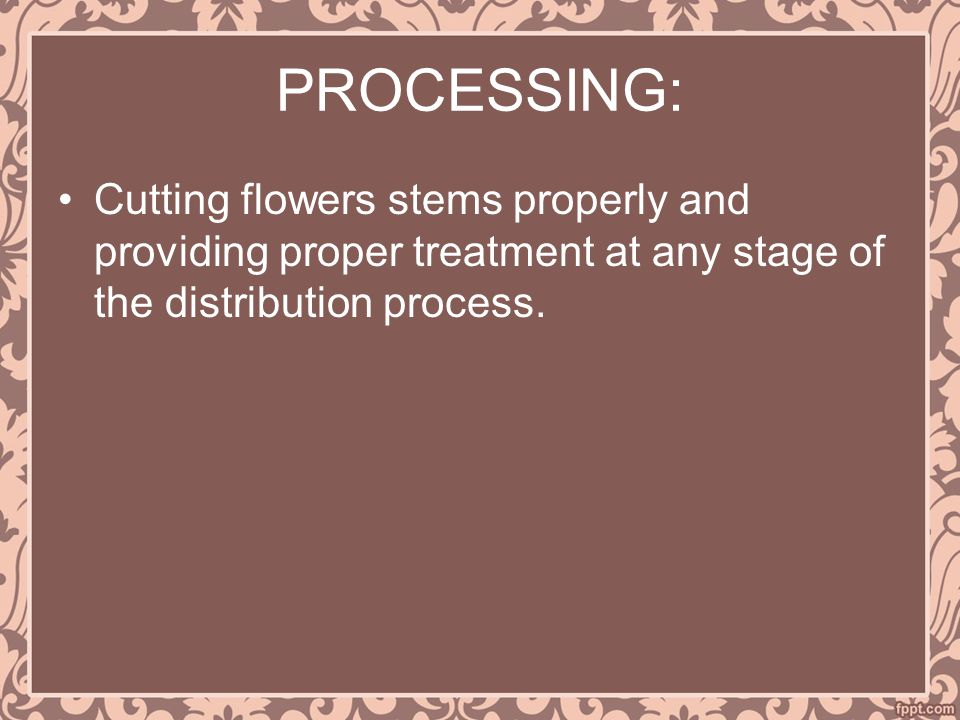PROCESSING: Cutting flowers stems properly and providing proper treatment at any stage of the distribution process.