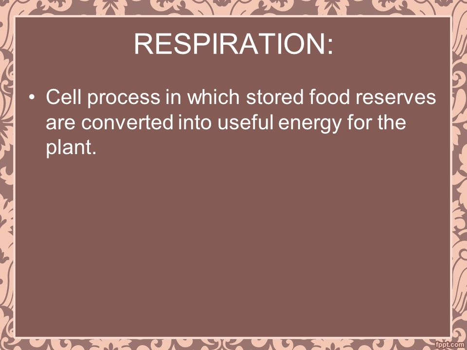 RESPIRATION: Cell process in which stored food reserves are converted into useful energy for the plant.