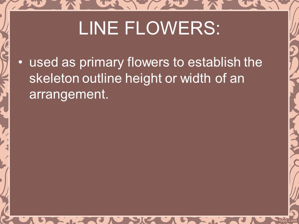 LINE FLOWERS: used as primary flowers to establish the skeleton outline height or width of an arrangement.