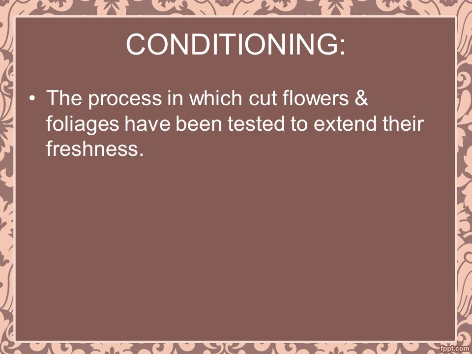 CONDITIONING: The process in which cut flowers & foliages have been tested to extend their freshness.
