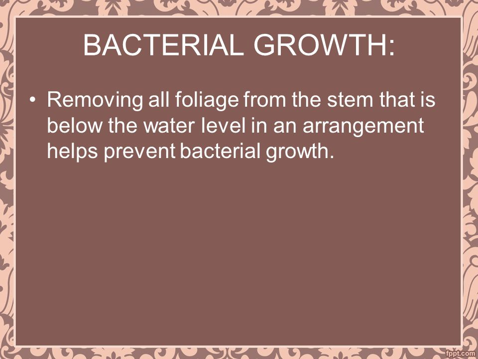 BACTERIAL GROWTH: Removing all foliage from the stem that is below the water level in an arrangement helps prevent bacterial growth.