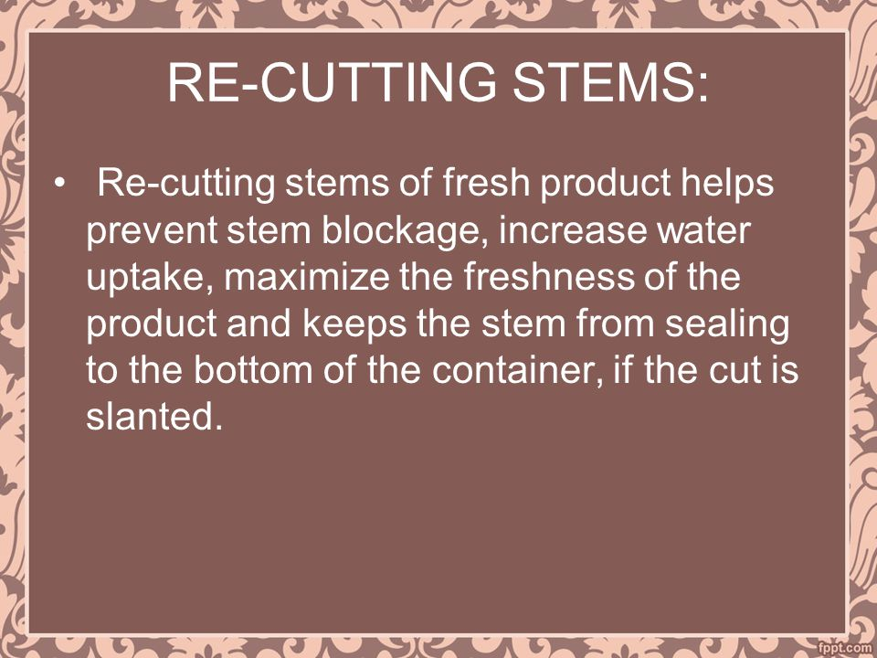 RE-CUTTING STEMS: