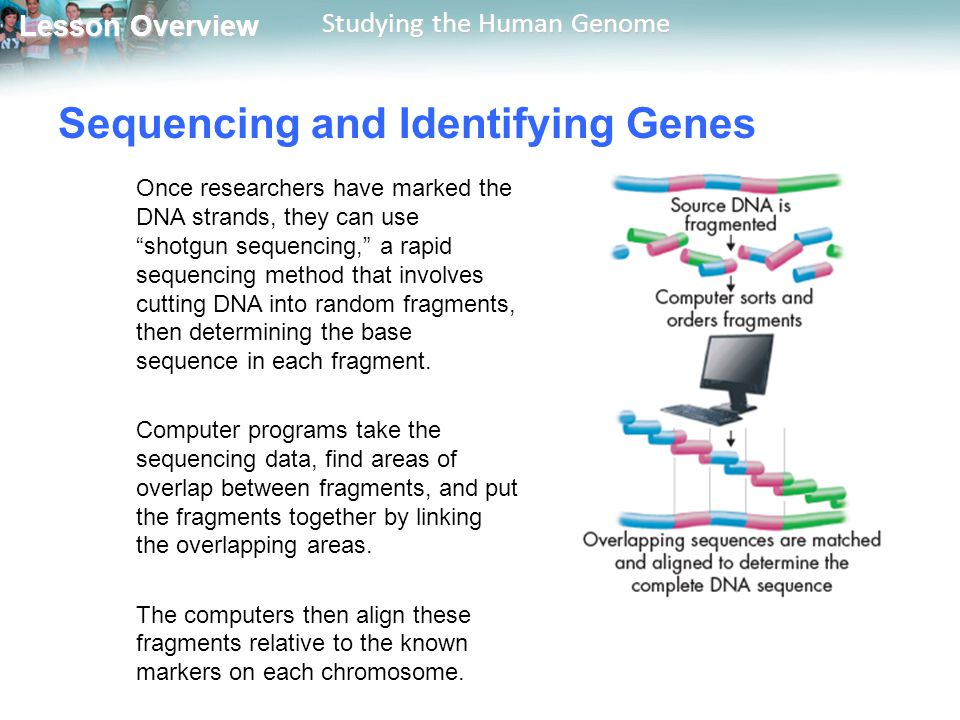 Sequencing and Identifying Genes