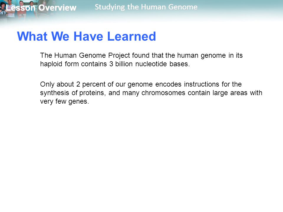 What We Have Learned The Human Genome Project found that the human genome in its haploid form contains 3 billion nucleotide bases.