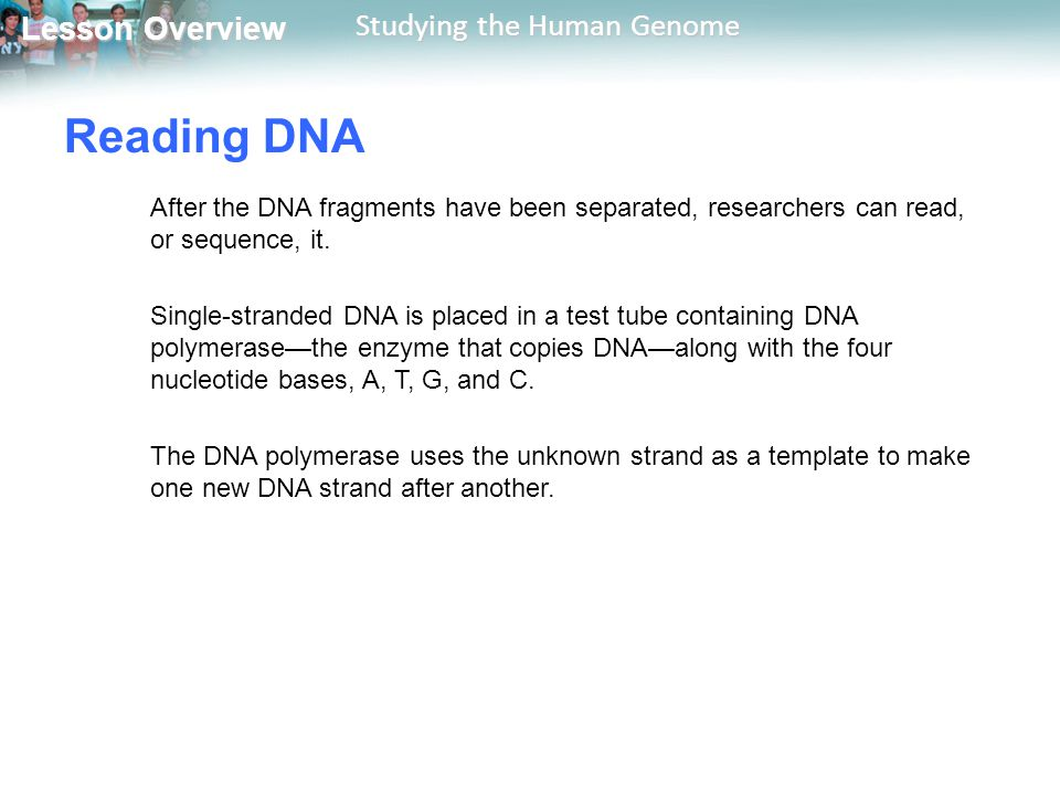 Reading DNA After the DNA fragments have been separated, researchers can read, or sequence, it.