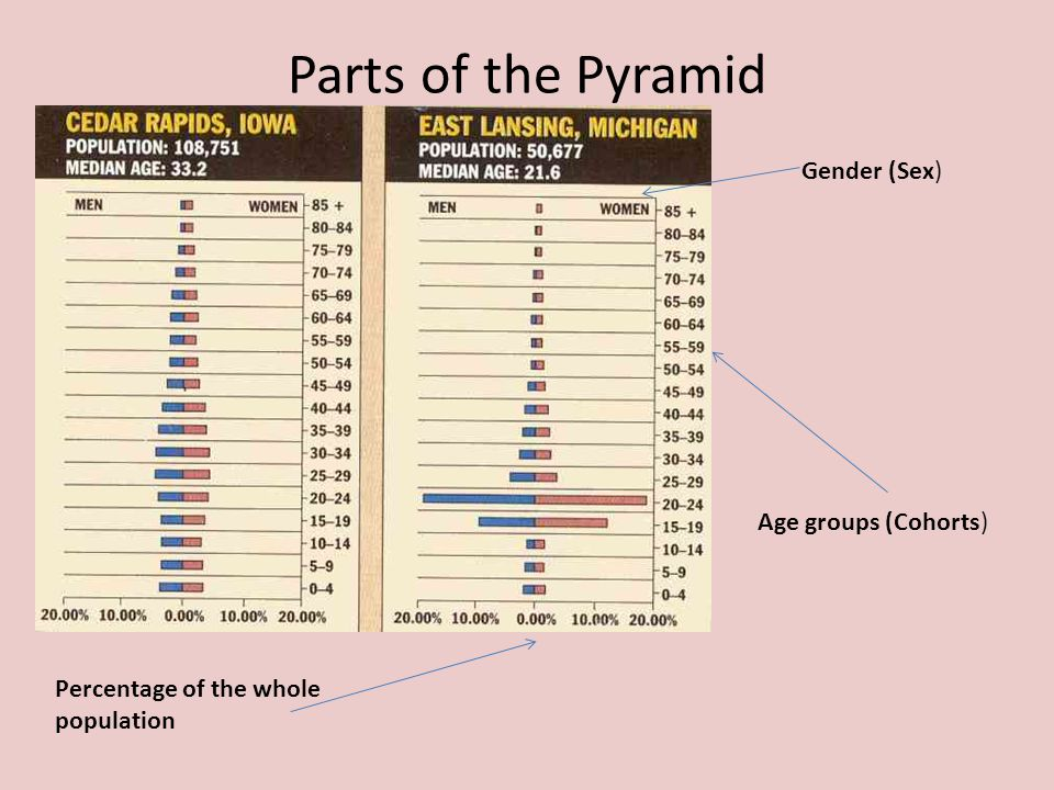 Parts of the Pyramid Gender (Sex) Age groups (Cohorts)