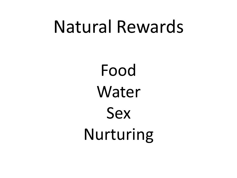 Natural Rewards Food Water Sex Nurturing