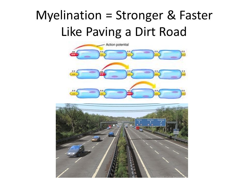 Myelination = Stronger & Faster Like Paving a Dirt Road
