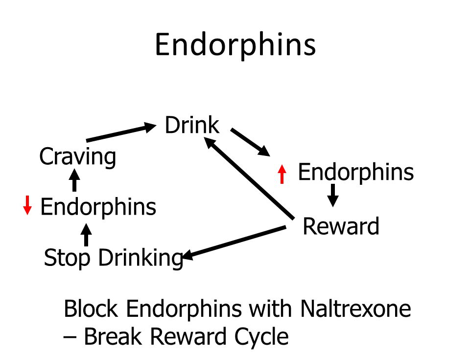 Endorphins Drink Craving Endorphins Endorphins Reward Stop Drinking