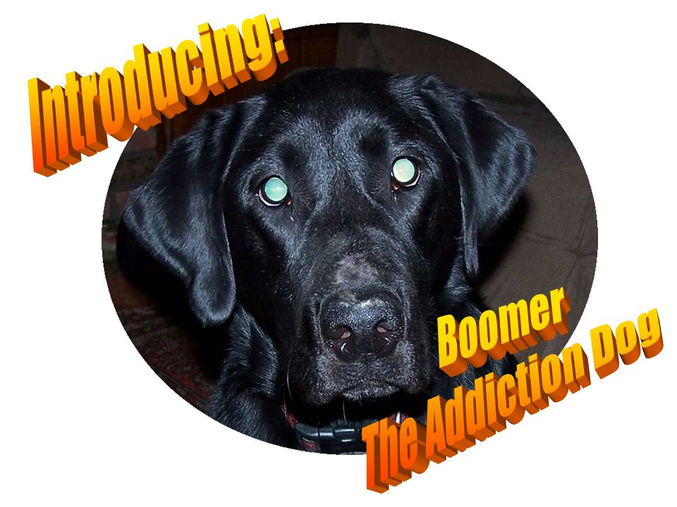 Introducing: Boomer The Addiction Dog