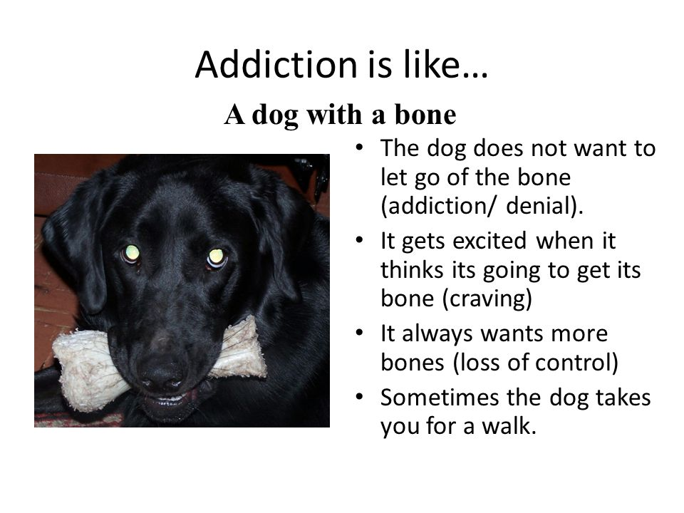 Addiction is like… A dog with a bone