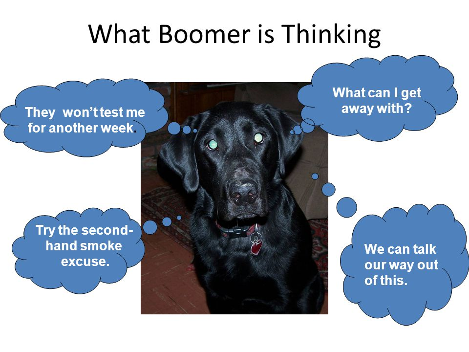 What Boomer is Thinking