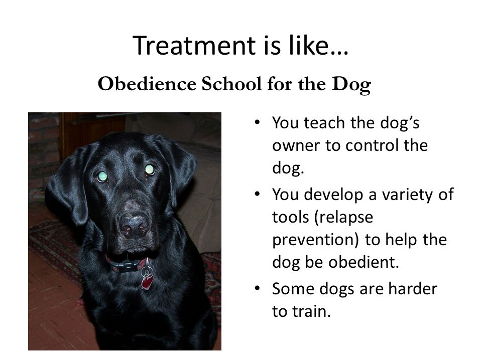 Treatment is like… Obedience School for the Dog