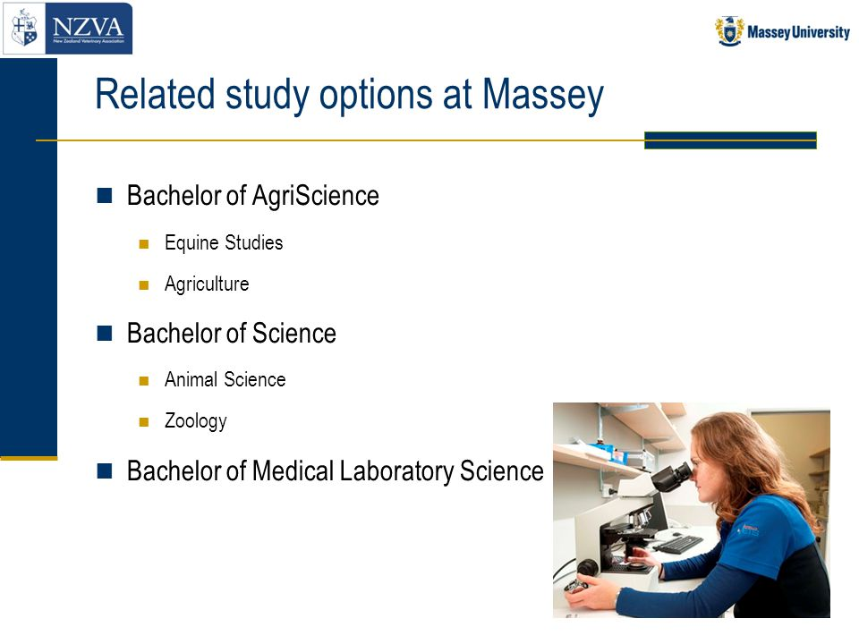 Related study options at Massey