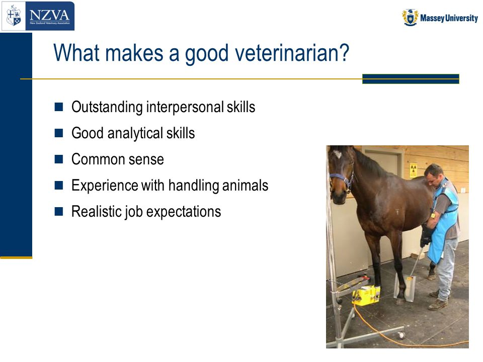 What makes a good veterinarian