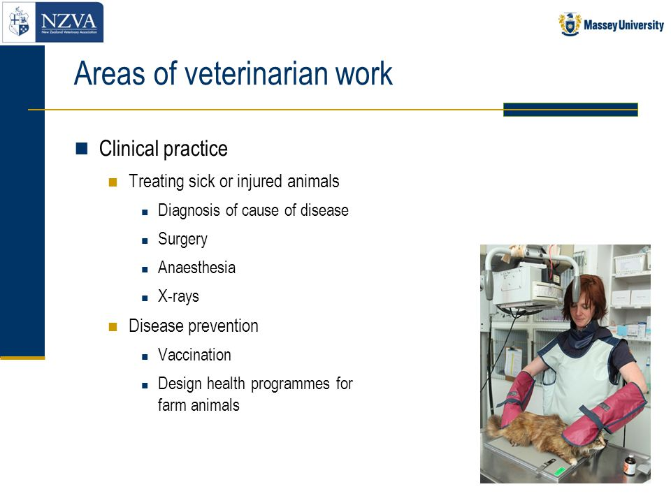 Areas of veterinarian work