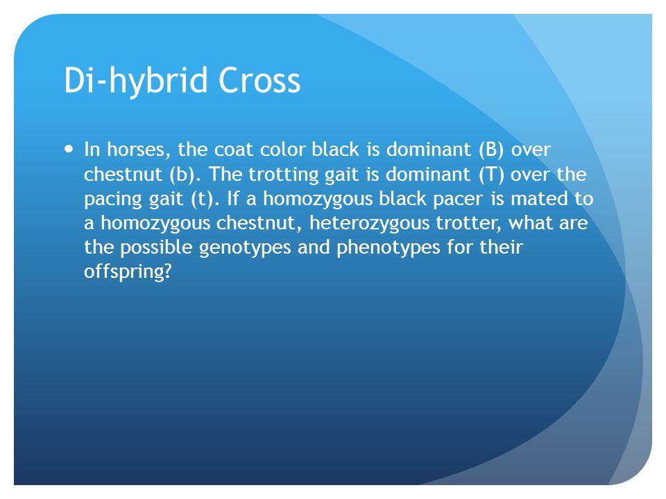 Di-hybrid Cross