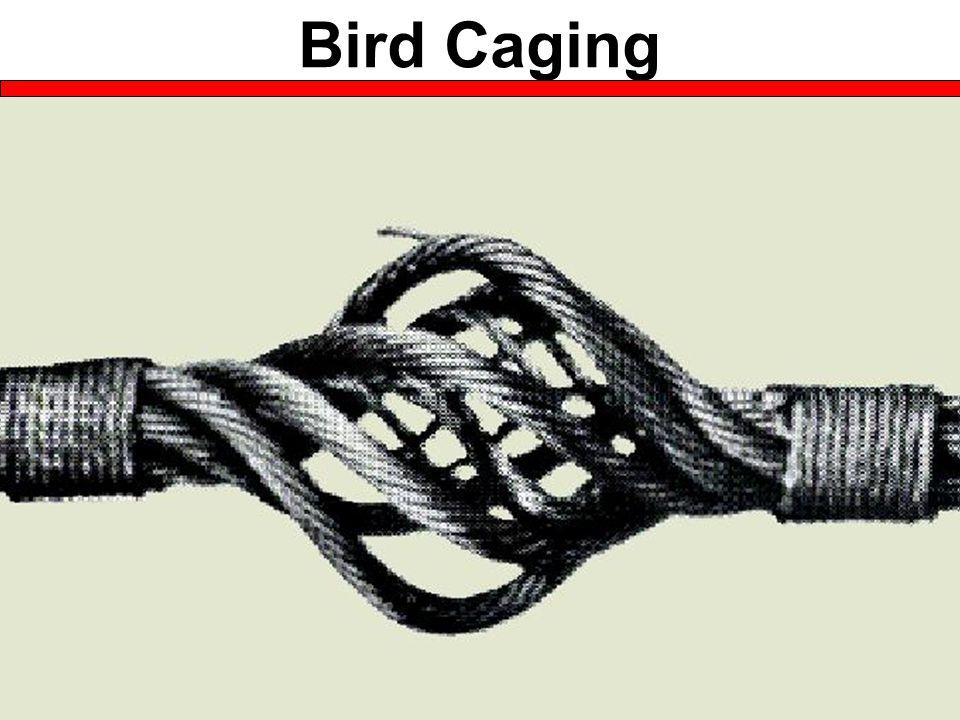 Bird Caging