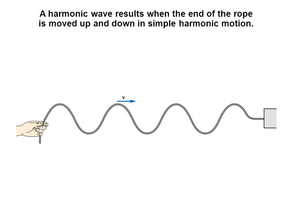 A harmonic wave results when the end of the rope is moved up and down in simple harmonic motion.