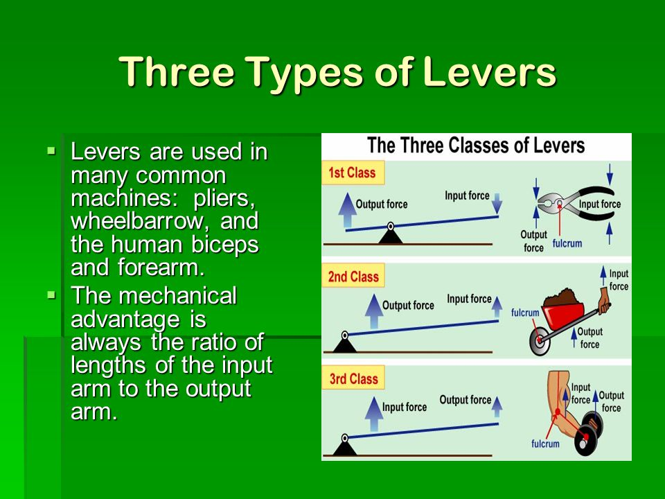 Three Types of Levers Levers are used in many common machines: pliers, wheelbarrow, and the human biceps and forearm.