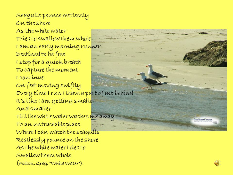 Seagulls pounce restlessly