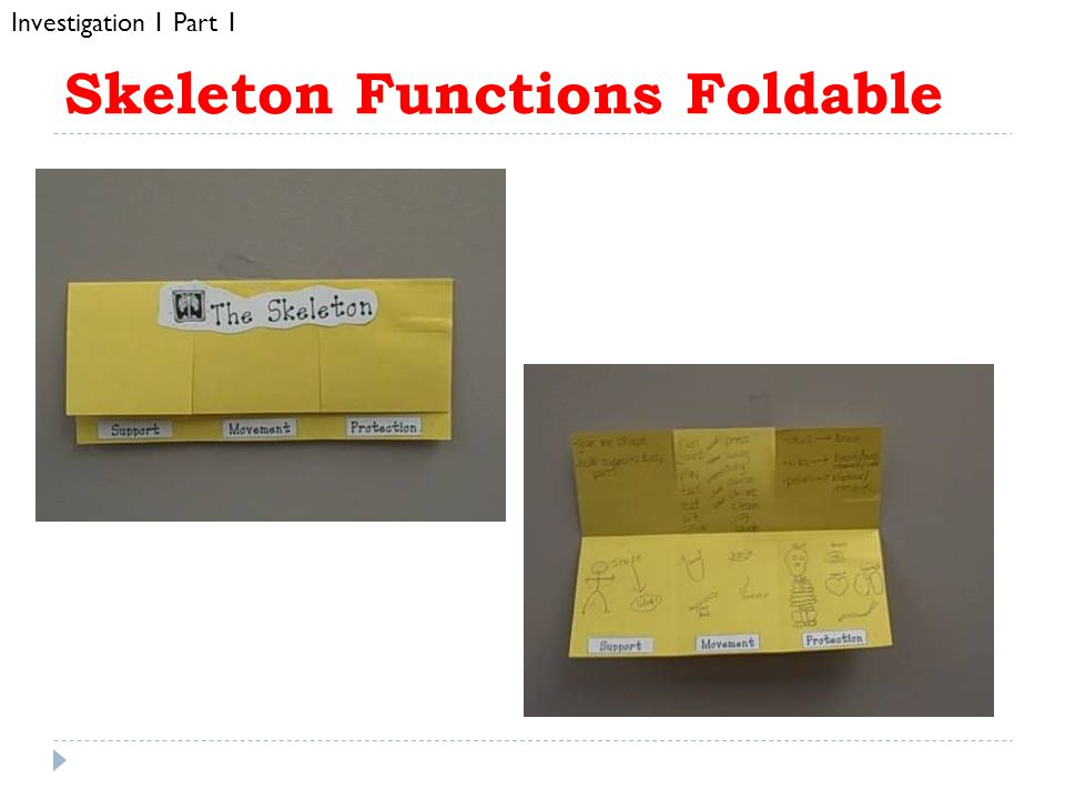 Skeleton Functions Foldable