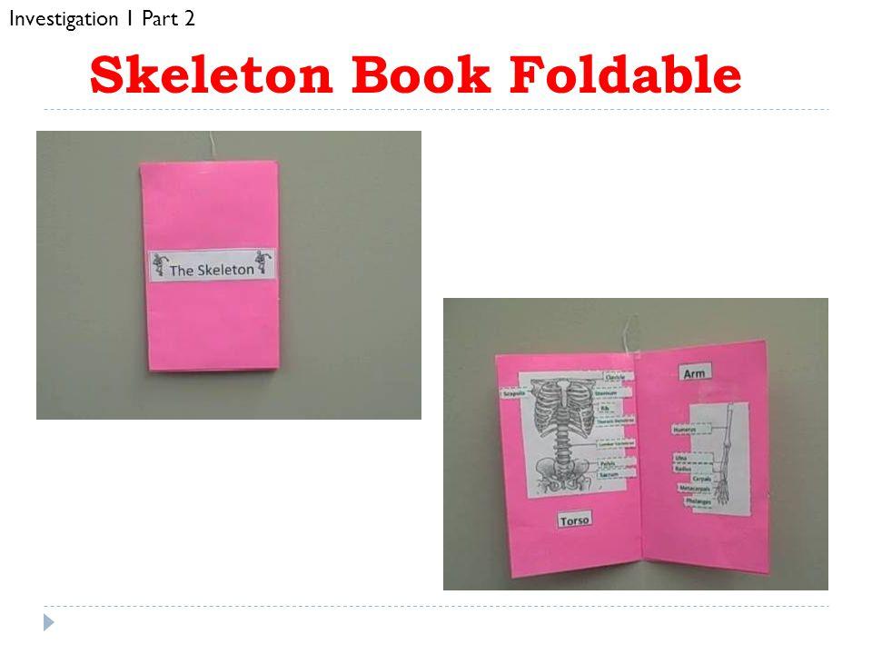 Skeleton Book Foldable