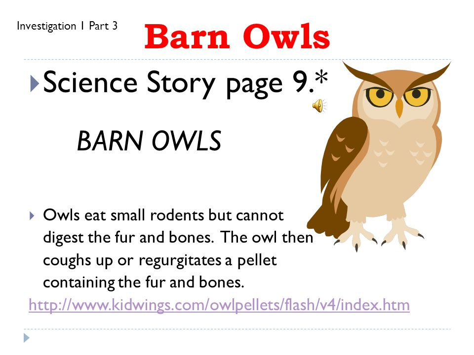 Barn Owls Science Story page 9.* BARN OWLS