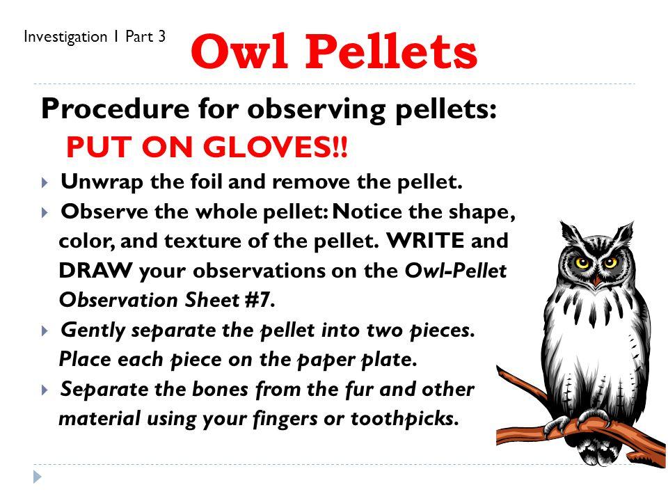Owl Pellets Procedure for observing pellets: PUT ON GLOVES!!