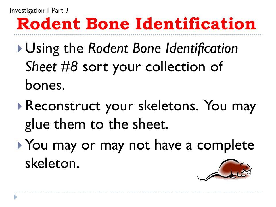 Rodent Bone Identification