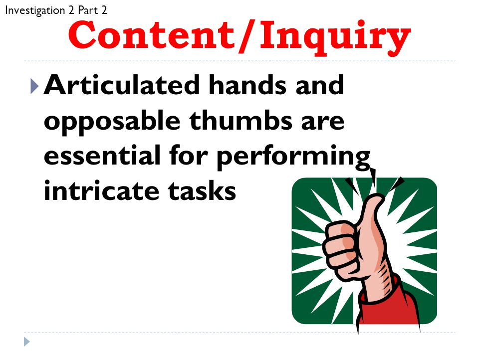 Investigation 2 Part 2 Content/Inquiry. Articulated hands and opposable thumbs are essential for performing intricate tasks.
