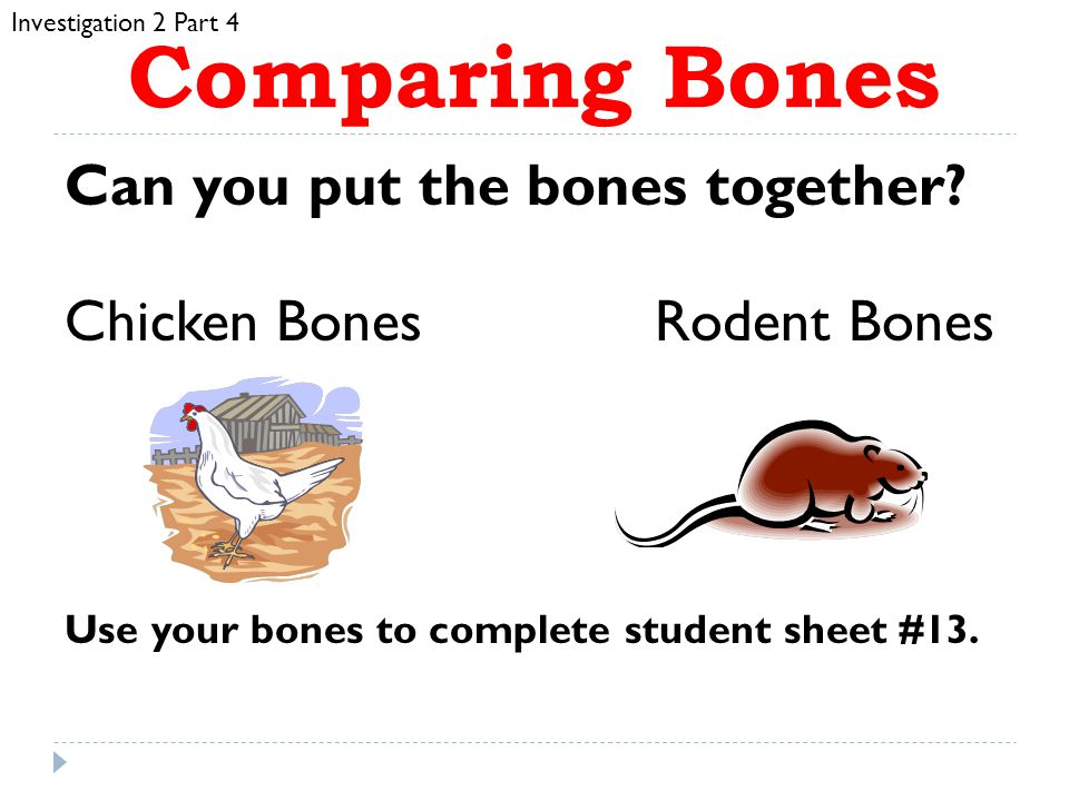 Comparing Bones Can you put the bones together