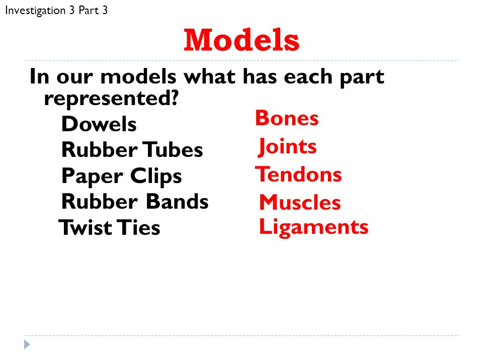 Investigation 3 Part 3 Models. In our models what has each part represented Dowels Rubber Tubes Paper Clips Rubber Bands Twist Ties
