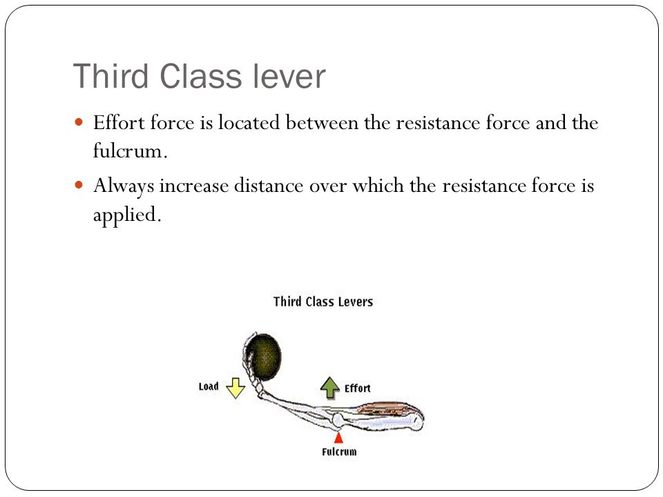 Third Class lever Effort force is located between the resistance force and the fulcrum.