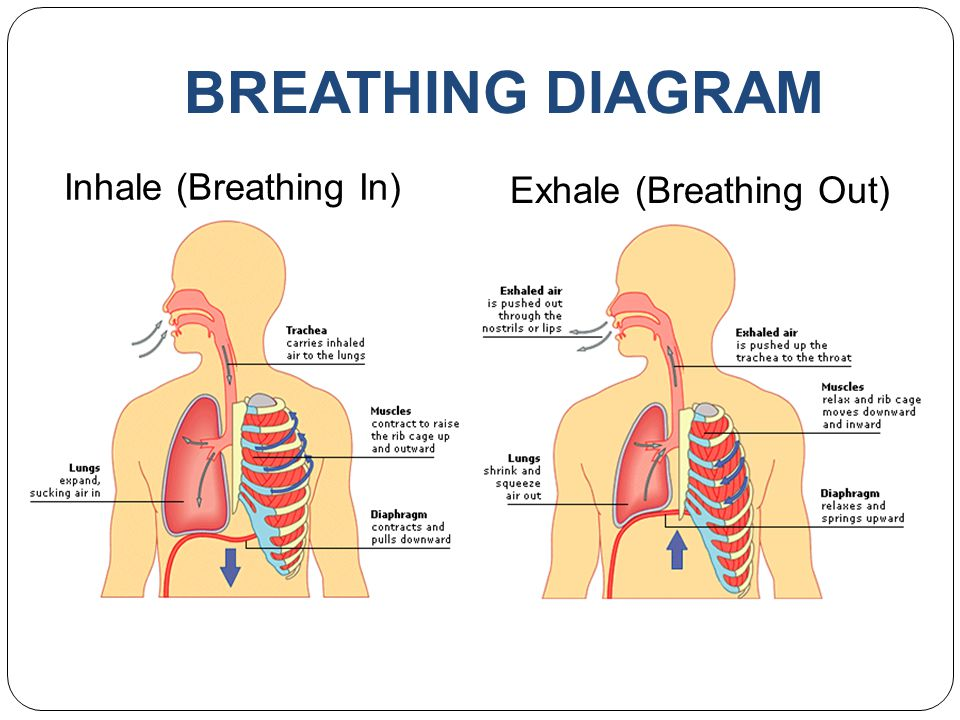 Exhale (Breathing Out)