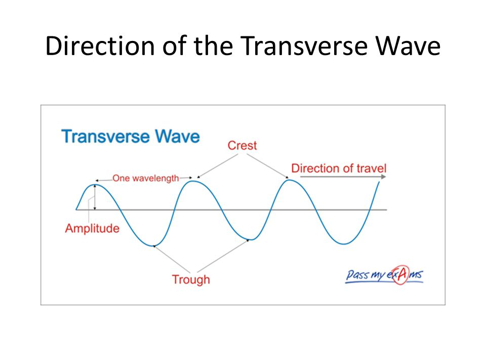 Direction of the Transverse Wave