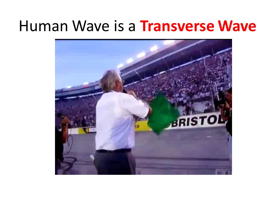 Human Wave is a Transverse Wave