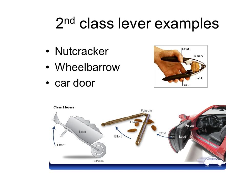 2nd class lever examples