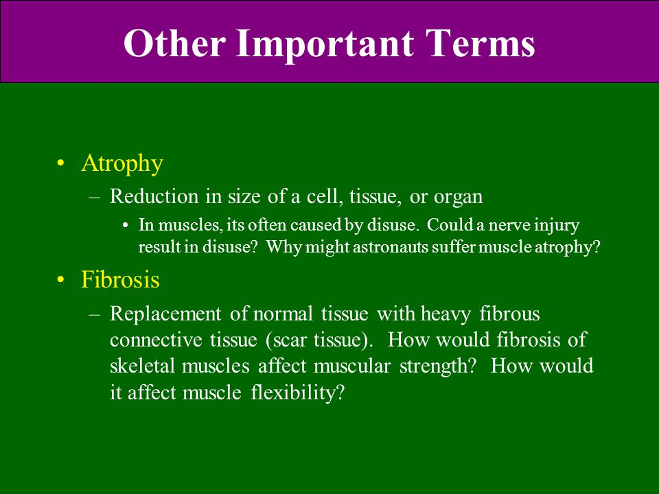 Other Important Terms Atrophy Fibrosis