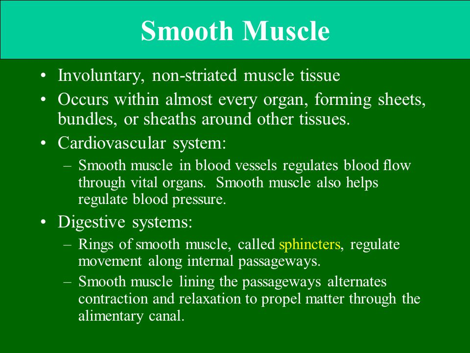 Smooth Muscle Involuntary, non-striated muscle tissue