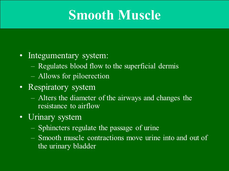 Smooth Muscle Integumentary system: Respiratory system Urinary system