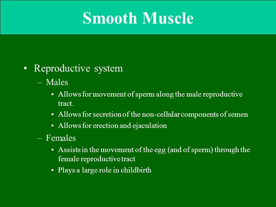 Smooth Muscle Reproductive system Males Females