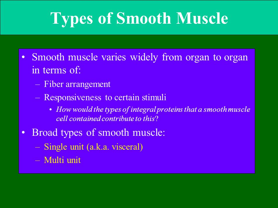 Types of Smooth Muscle Smooth muscle varies widely from organ to organ in terms of: Fiber arrangement.